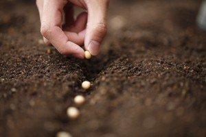 GMO debate