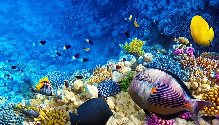 10 Jobs You Can Get in the Ocean Field - STEMJobs