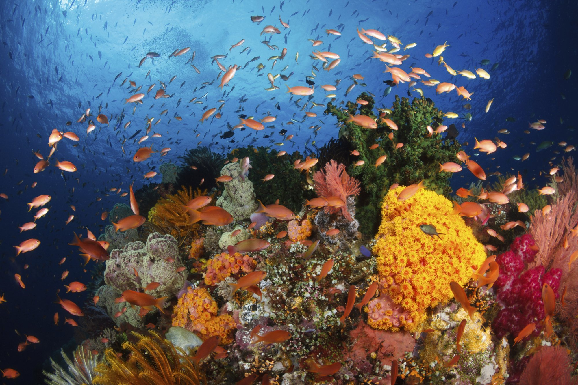 Natural Resources Found In The Great Barrier Reef