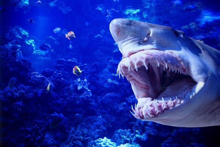deadliest sea creatures