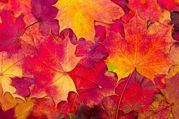 Autumnal equinox fun facts about the first day of fall for When will the leaves start changing 2017